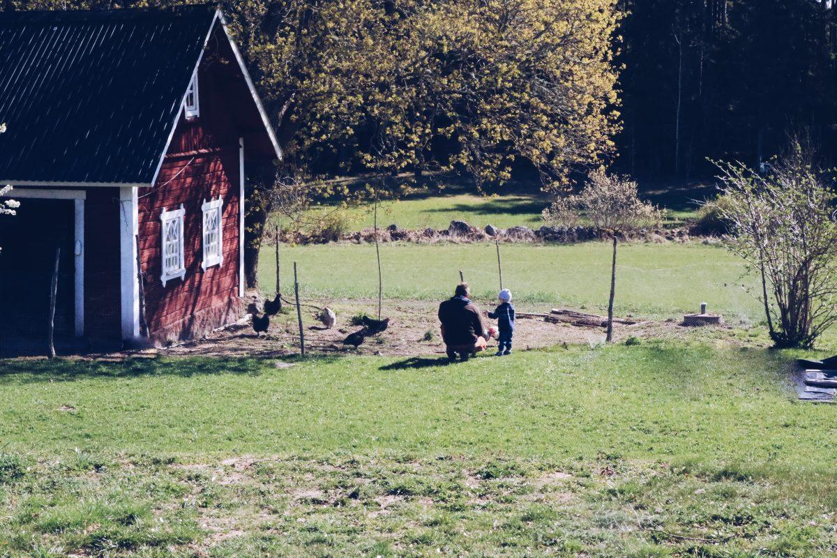 barn och höns på landet