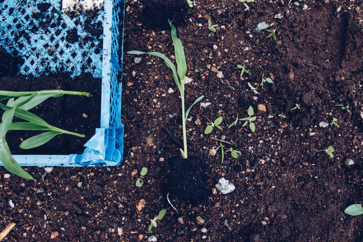 En planta i soil blocks